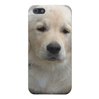 Golden Retriever puppy dog cute beautiful photo Case For iPhone 5/5S