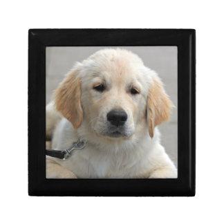 Golden Retriever puppy dog cute beautiful photo Gift Box