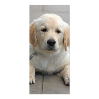 Golden Retriever puppy dog cute photo bookmark Rack Card Design