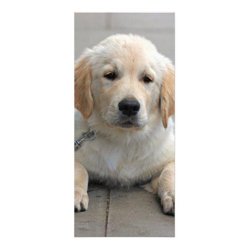 Golden Retriever puppy dog cute photo bookmark Rack Card Template
