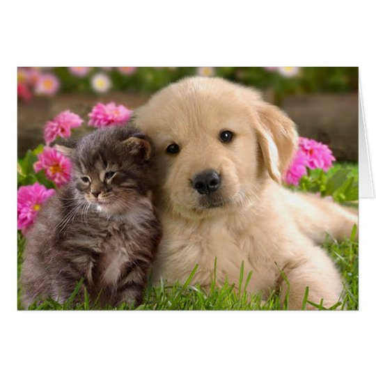 Golden Retriever Puppy Dog & Kitten Love Card