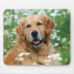 Golden Retriever Puppy Dog Mouse Pad