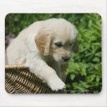Golden Retriever Puppy in Basket Mousepads