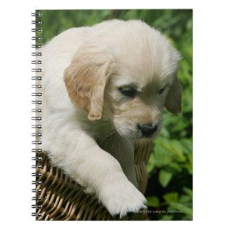 Golden Retriever Puppy in Basket Note Books