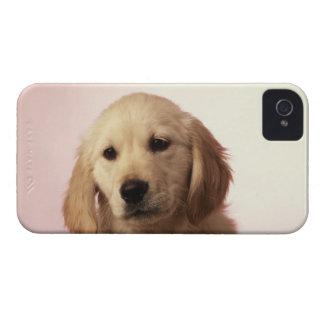 Golden Retriever Puppy iPhone 4 Case-Mate Cases