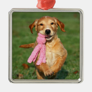 Golden retriever puppy jumps with toy christmas ornament