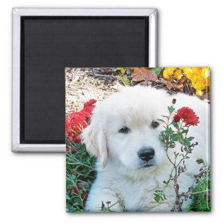 Golden Retriever Puppy Magnet