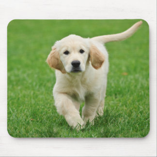 Golden retriever puppy mouse mat