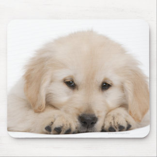 Golden retriever puppy mouse pad