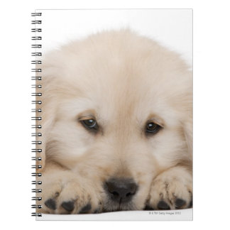 Golden retriever puppy notebook