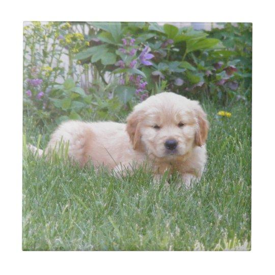 Golden Retriever Puppy Small Square Tile