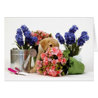 Golden Retriever Puppy Smelling the Flowers Card