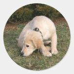 Golden Retriever Puppy Sniffing Sticker