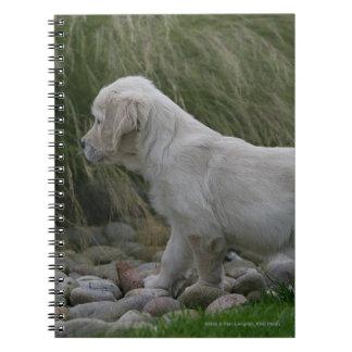 Golden Retriever Puppy Standing Note Book