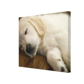 Golden Retriever Puppy Takes A Nap Canvas Print