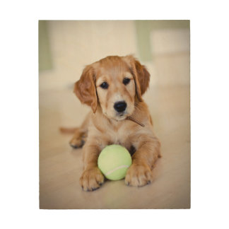 Golden Retriever Puppy Wants To Play Wood Print