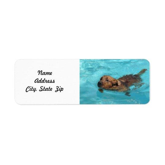 Golden Retriever Return Address Label, Swim