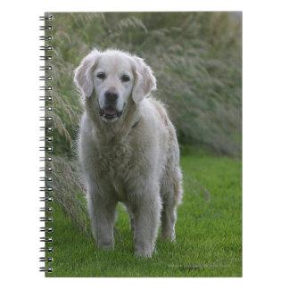 Golden Retriever Running 2 Notebooks
