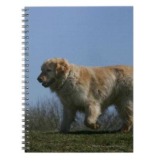 Golden Retriever Running 3 Notebook
