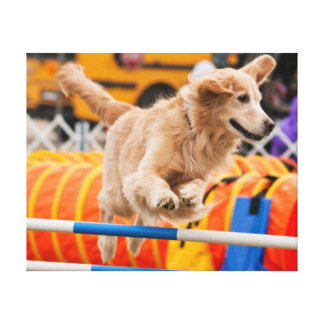 Golden Retriever Running an Agility Course Gallery Wrapped Canvas