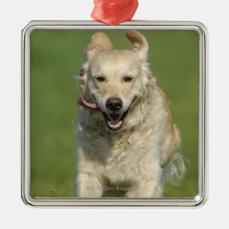 Golden retriever running through meadow Silver-Colored square decoration