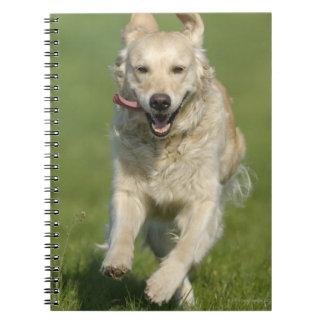 Golden retriever running through meadow spiral notebook
