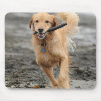Golden Retriever Running With  Stick In Mouth Mouse Pad