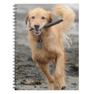 Golden Retriever Running With  Stick In Mouth Notebooks