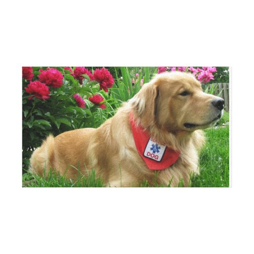 Golden Retriever Service Dog Lounges by Flowers Stretched Canvas Print