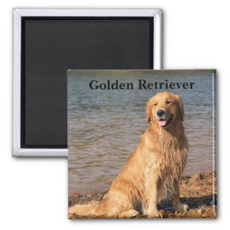 Golden Retriever Sitting Text Magnet