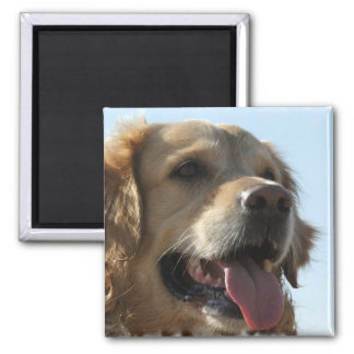 Golden Retriever Square Magnet