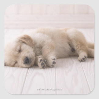 Golden Retriever Square Sticker
