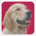 Golden Retriever Square Sticker