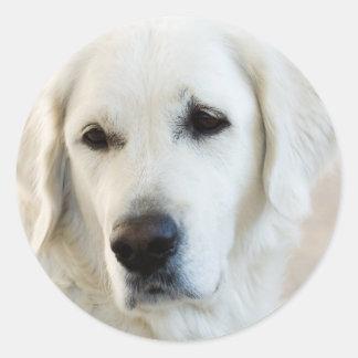Golden Retriever Round Sticker