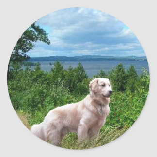 Golden Retriever Sticker At The Lake