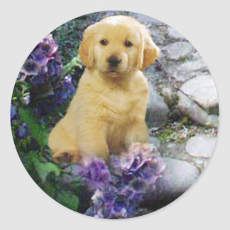Golden Retriever Sticker Hydrangia