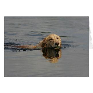Golden Retriever Swimming Card