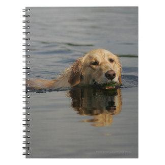 Golden Retriever Swimming Spiral Note Books