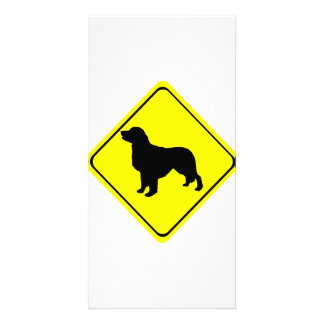 Golden Retriever Warning Sign Love Dogs Silhouette Photo Card