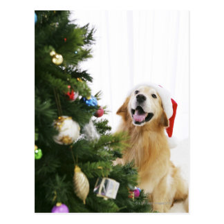 Golden retriever which watches Christmas tree Postcard