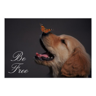 Golden Retriever With Butterfly On His Nose Poster