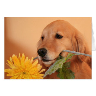 Golden Retriever With Flower Card