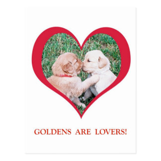Golden Retrievers are Lovers!  Valentine's Day Postcard