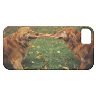 Golden Retrievers playing tug-of-war with toy in iPhone 5 Cover