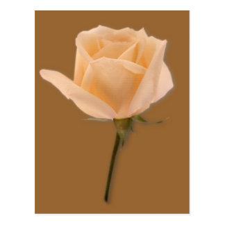 Golden Rose Postcard