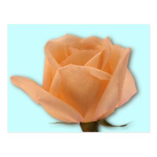 Golden Rose Post Card