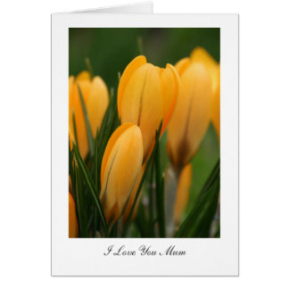Golden Spring Crocuses - I Love You Mum Greeting Card