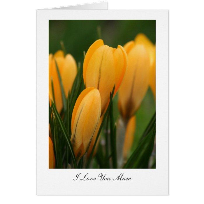 Golden Spring Crocuses - I Love You Mum Greeting Card