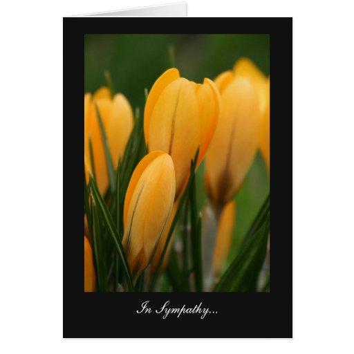 Golden Spring Crocuses - In Sympathy Cards