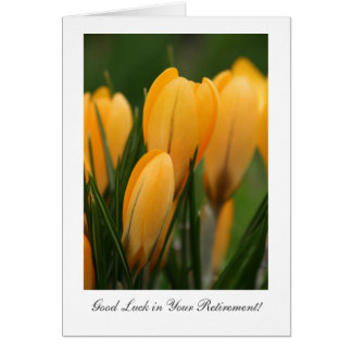 Golden Spring Crocuses - Luck in Your Retirement Greeting Card